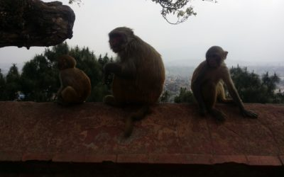 Fear of the Monkeys